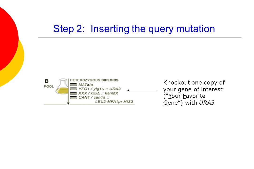 Step 2: Inserting the query mutation