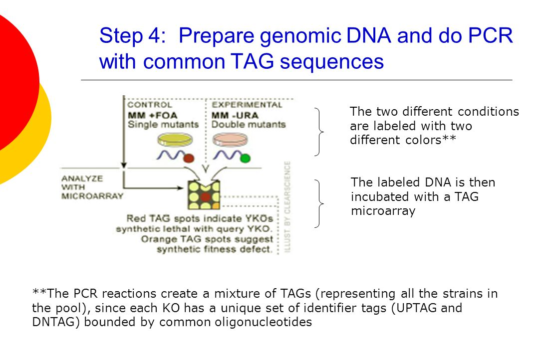Step 4: Prepare genomic DNA and do PCR with common TAG sequences