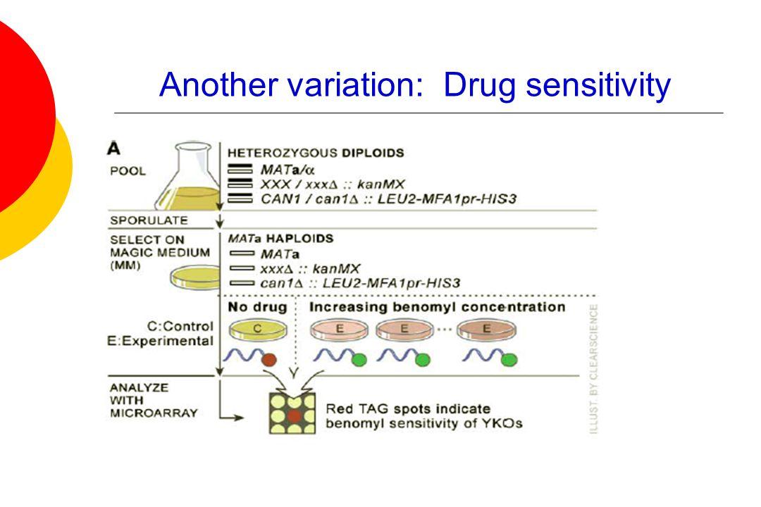 Another variation: Drug sensitivity