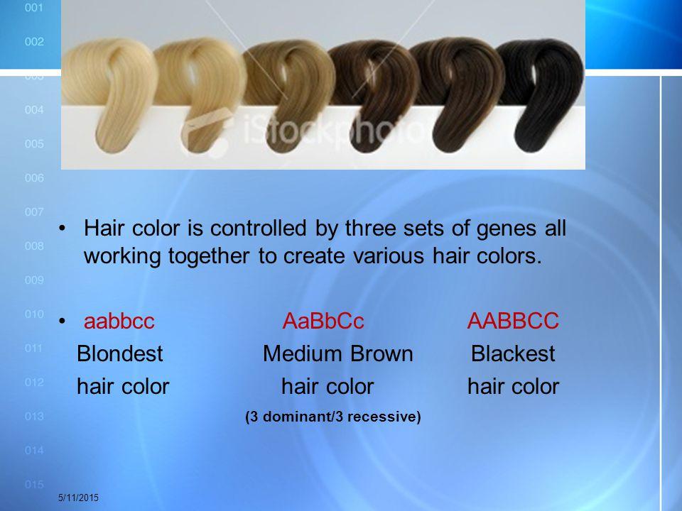 Blondest Medium Brown Blackest