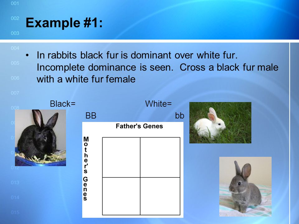 Example #1: In rabbits black fur is dominant over white fur. Incomplete dominance is seen. Cross a black fur male with a white fur female.