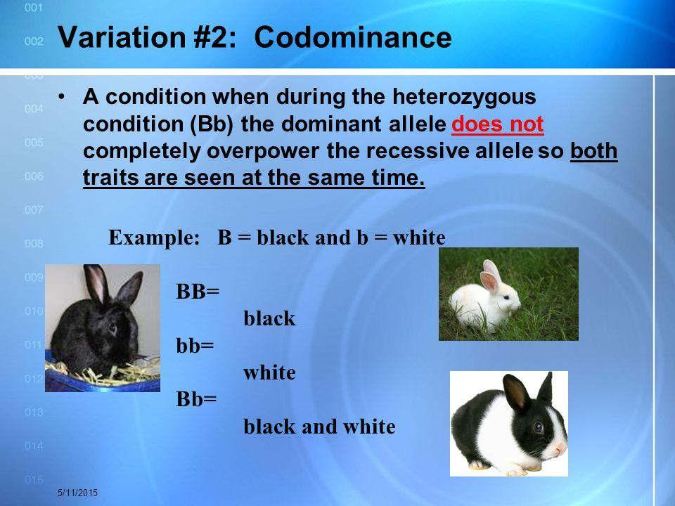 Variation #2: Codominance