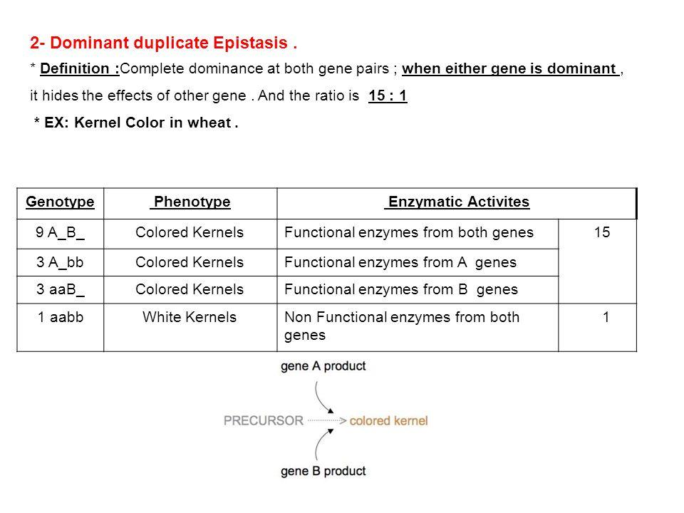2- Dominant duplicate Epistasis .