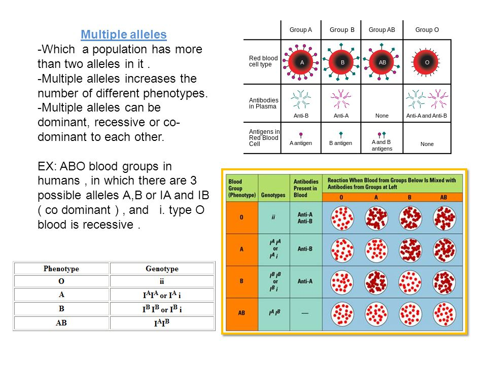 Multiple alleles -Which a population has more than two alleles in it . -Multiple alleles increases the number of different phenotypes.