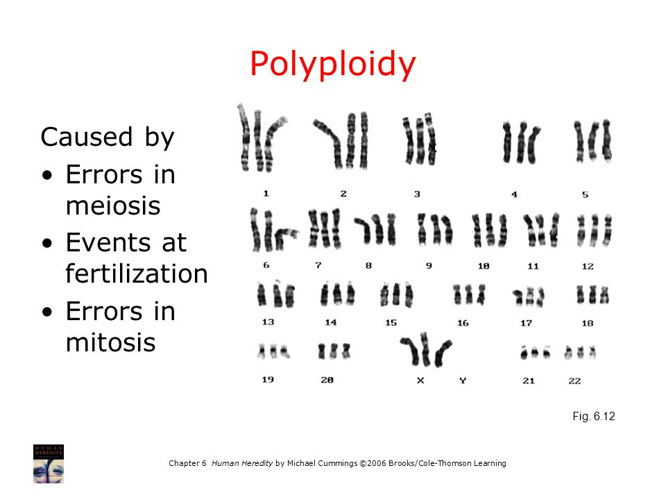 Polyploidy Caused by Errors in meiosis Events at fertilization