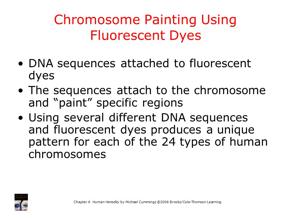 Chromosome Painting Using Fluorescent Dyes