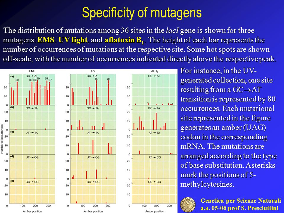 Specificity of mutagens