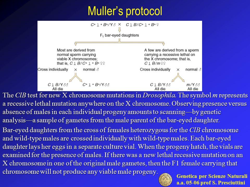 Muller's protocol