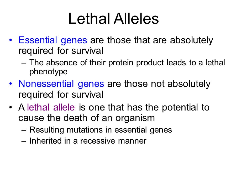 Lethal Alleles Essential genes are those that are absolutely required for survival. The absence of their protein product leads to a lethal phenotype.