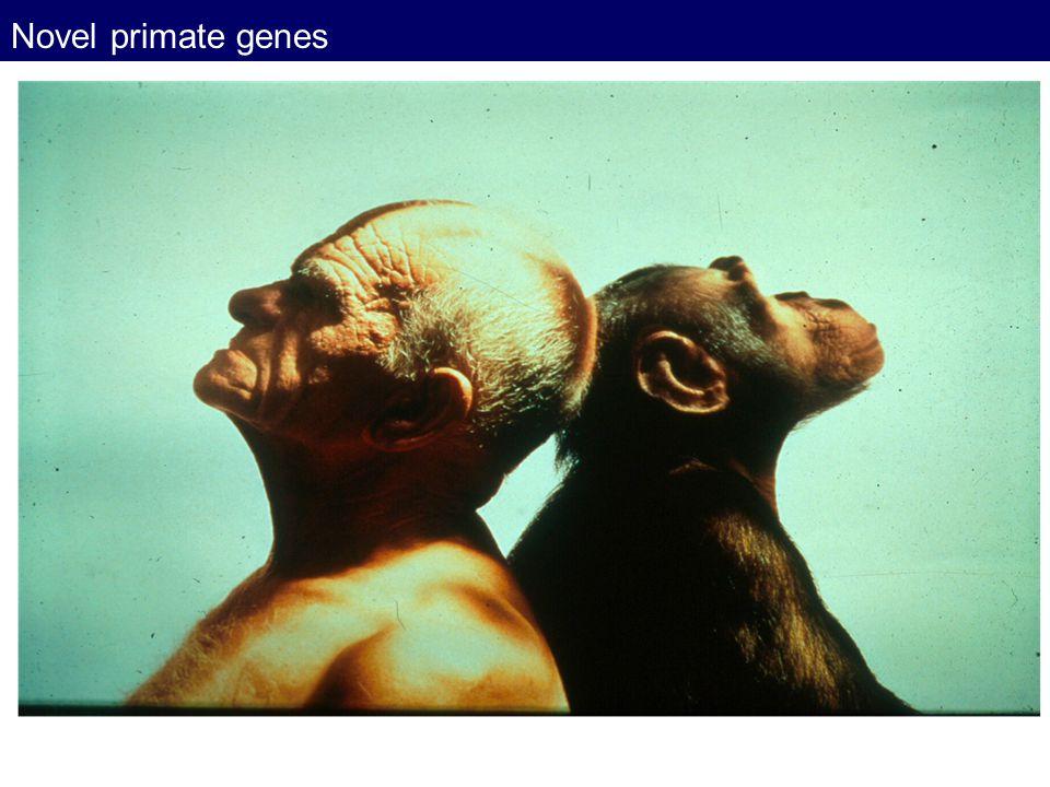 Novel primate genes