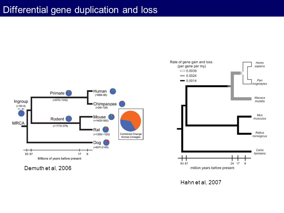 Differential gene duplication and loss