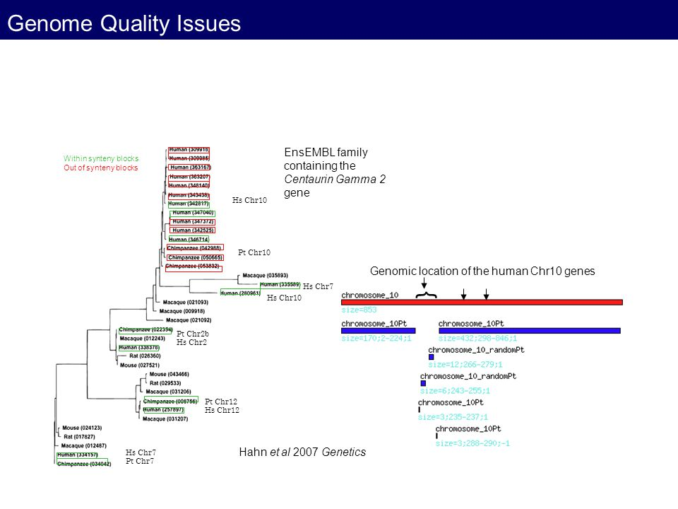 Genome Quality Issues } EnsEMBL family containing the