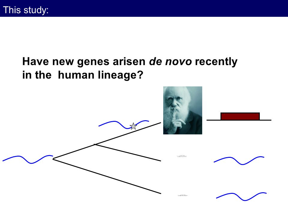 Have new genes arisen de novo recently in the human lineage