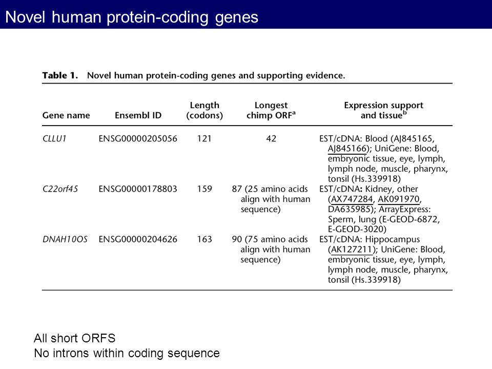 Novel human protein-coding genes