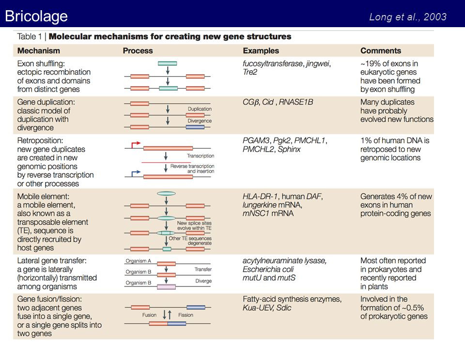 Bricolage Long et al., 2003
