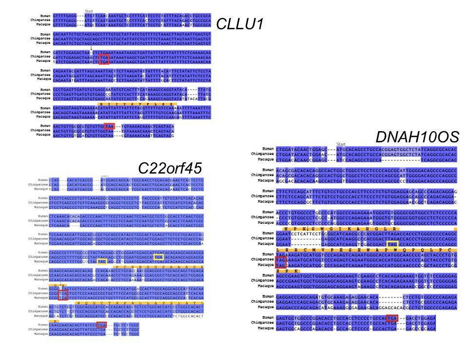 CLLU1 DNAH10OS C22orf45