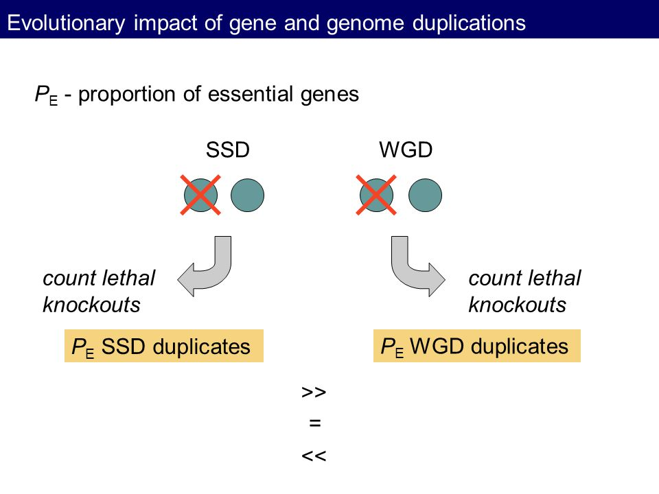 Evolutionary impact of gene and genome duplications