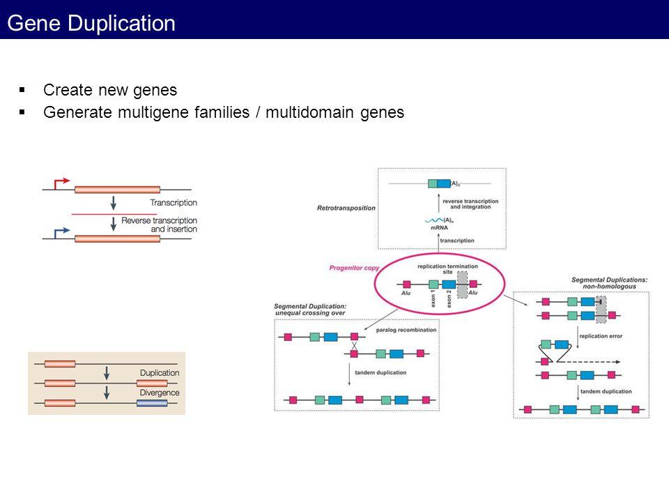 Gene Duplication Create new genes