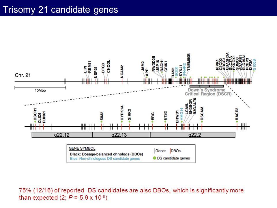 Trisomy 21 candidate genes