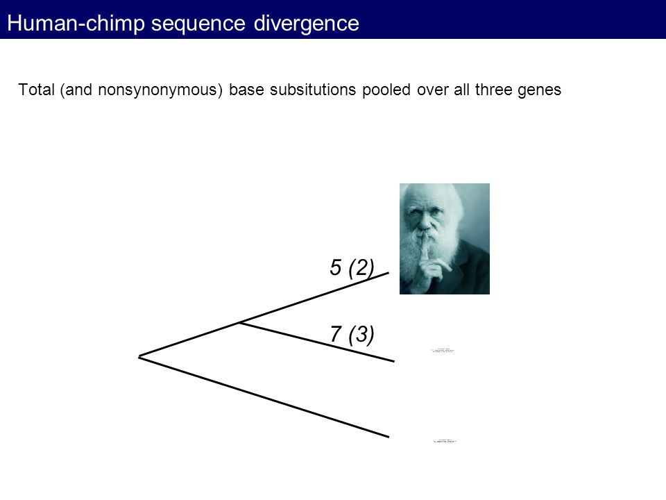 Human-chimp sequence divergence
