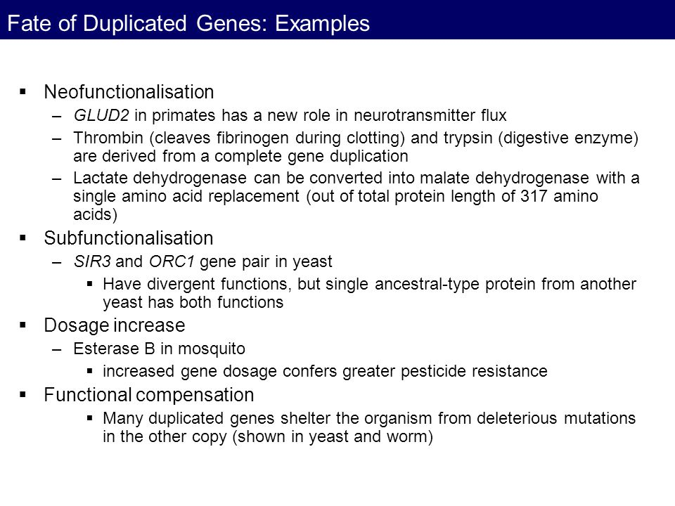 Fate of Duplicated Genes: Examples