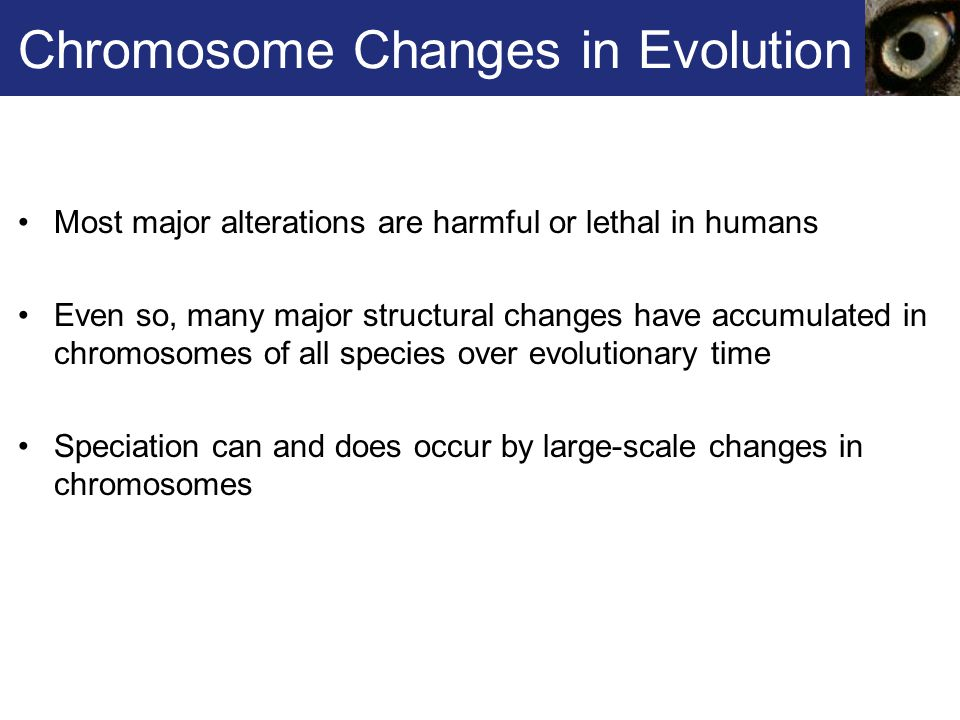 Chromosome Changes in Evolution