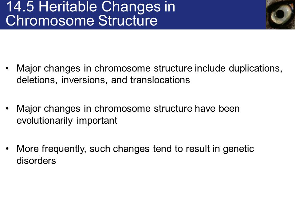 14.5 Heritable Changes in Chromosome Structure