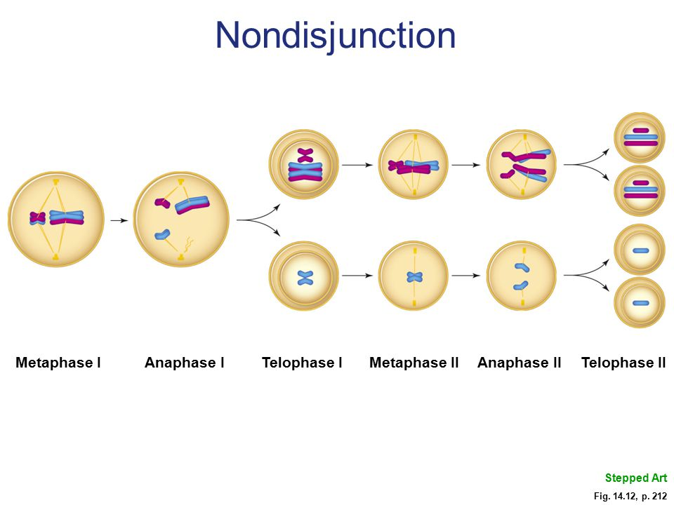 Nondisjunction Metaphase I Anaphase I Telophase I Metaphase II