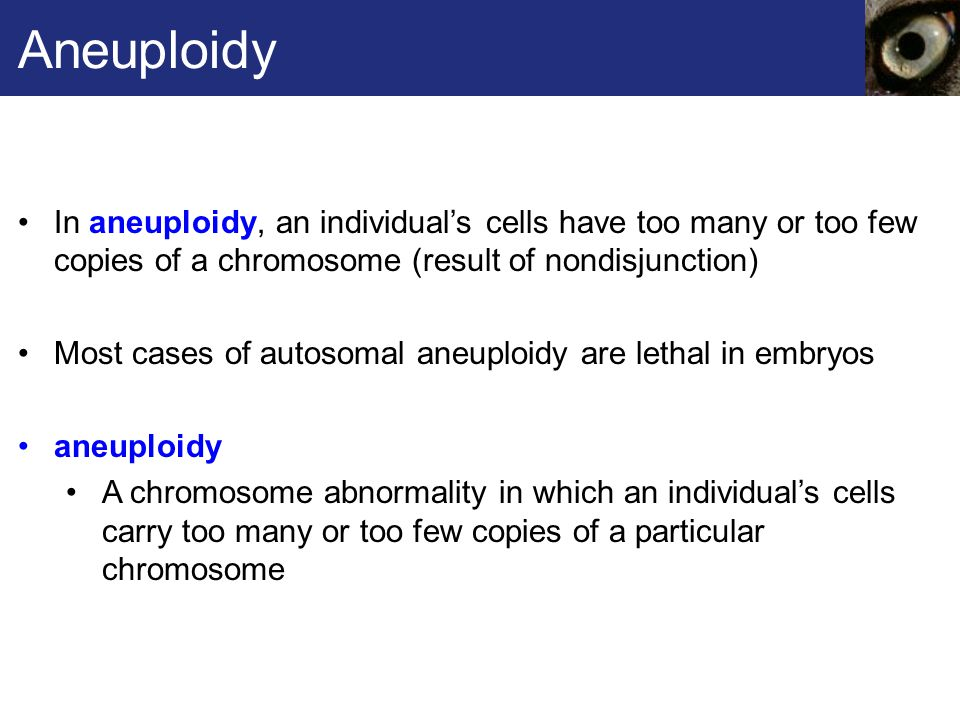 Aneuploidy In aneuploidy, an individual's cells have too many or too few copies of a chromosome (result of nondisjunction)