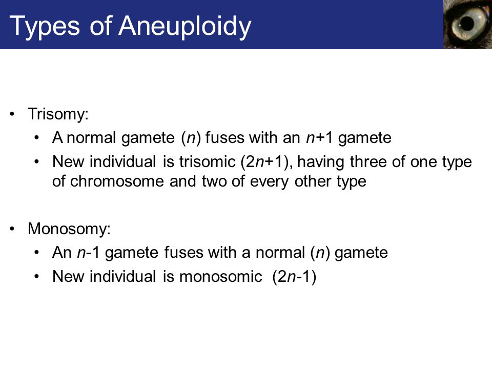 Types of Aneuploidy Trisomy: