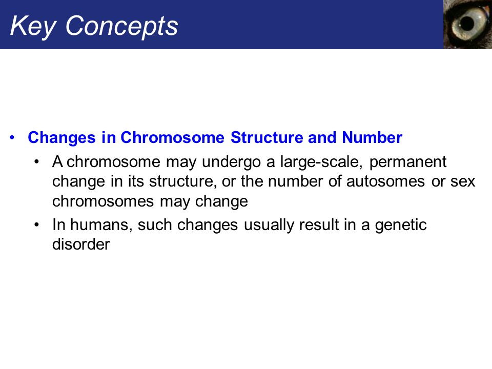 Key Concepts Changes in Chromosome Structure and Number