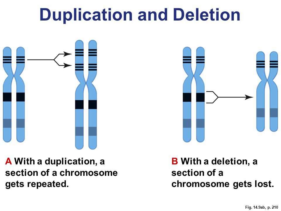 Duplication and Deletion