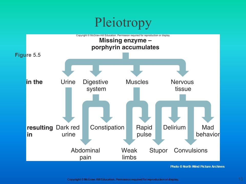 Pleiotropy Figure 5.5 Figure 5.5a Photo © North Wind Picture Archives