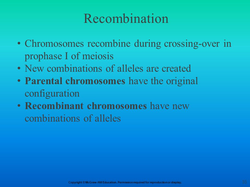 Recombination Chromosomes recombine during crossing-over in prophase I of meiosis. New combinations of alleles are created.