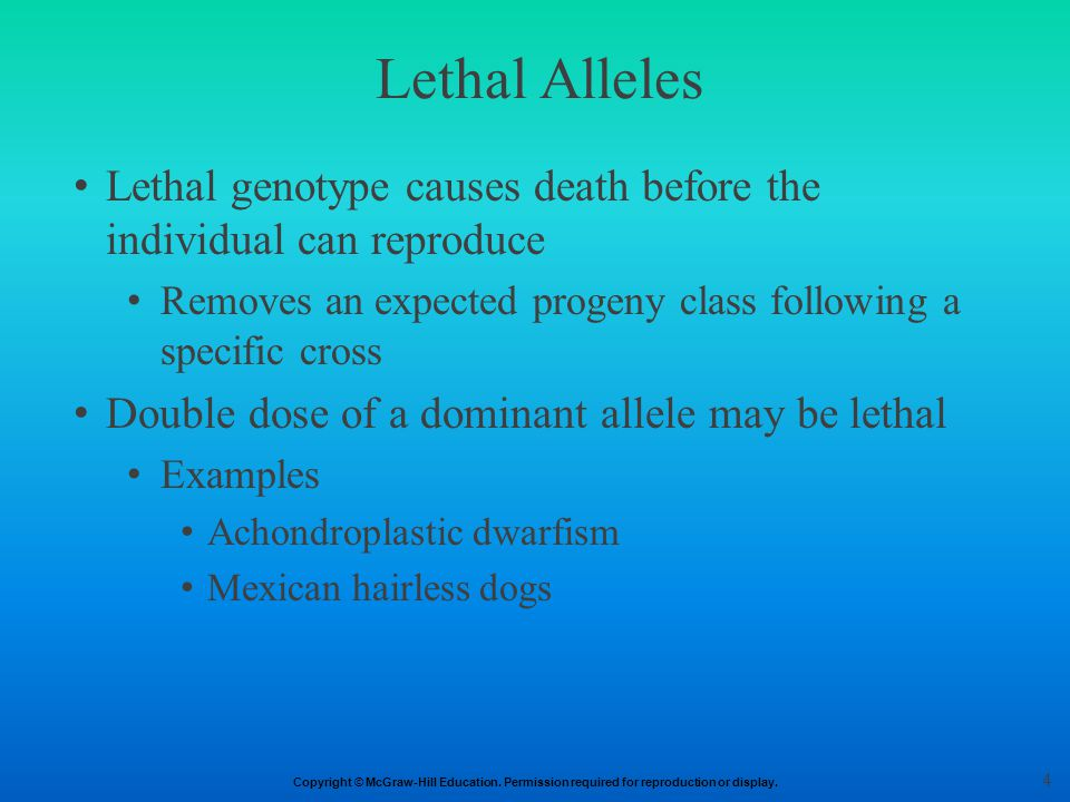 Lethal Alleles Lethal genotype causes death before the individual can reproduce. Removes an expected progeny class following a specific cross.