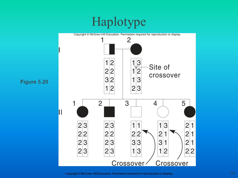 Haplotype Figure 5.20 48