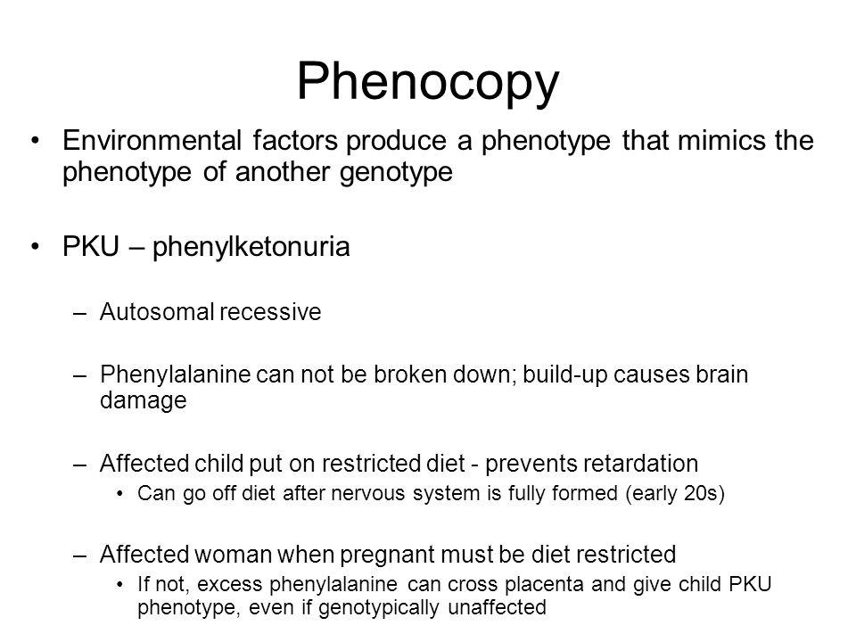 Phenocopy Environmental factors produce a phenotype that mimics the phenotype of another genotype. PKU – phenylketonuria.