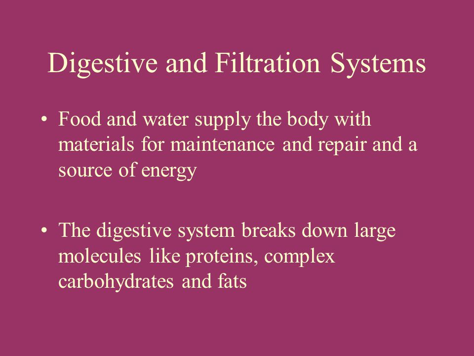 Digestive and Filtration Systems