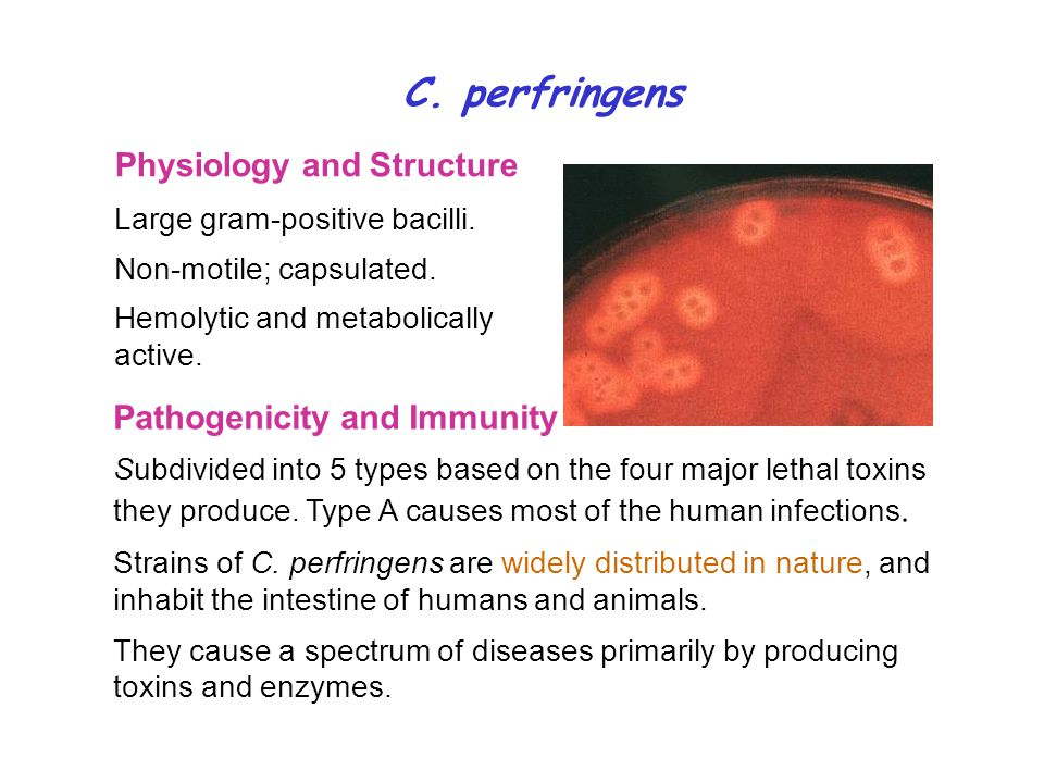 C. perfringens Physiology and Structure Pathogenicity and Immunity