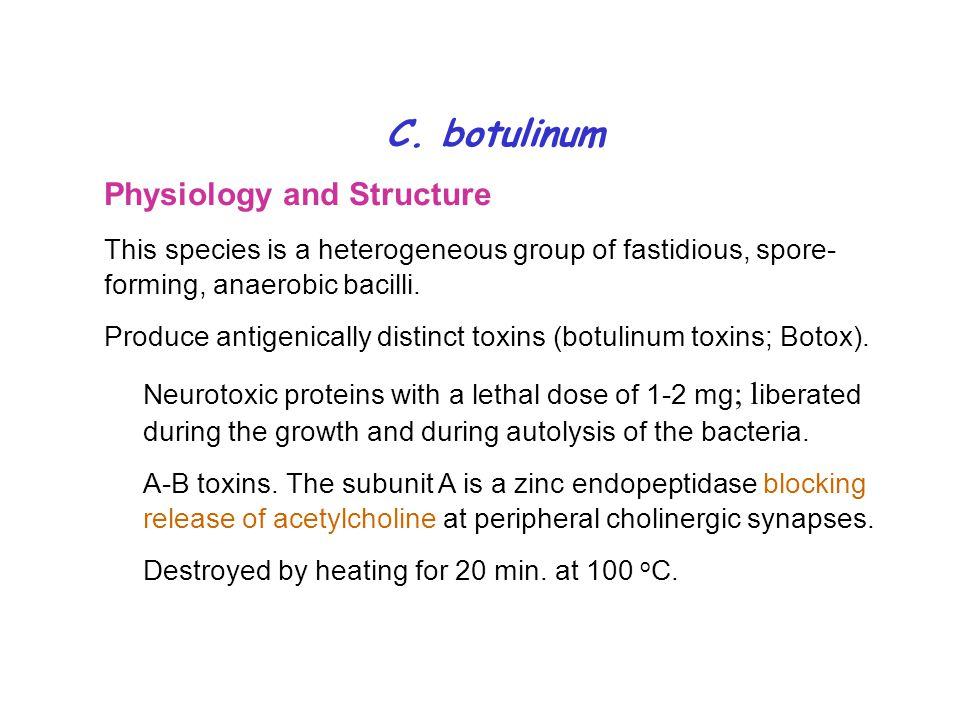 C. botulinum Physiology and Structure