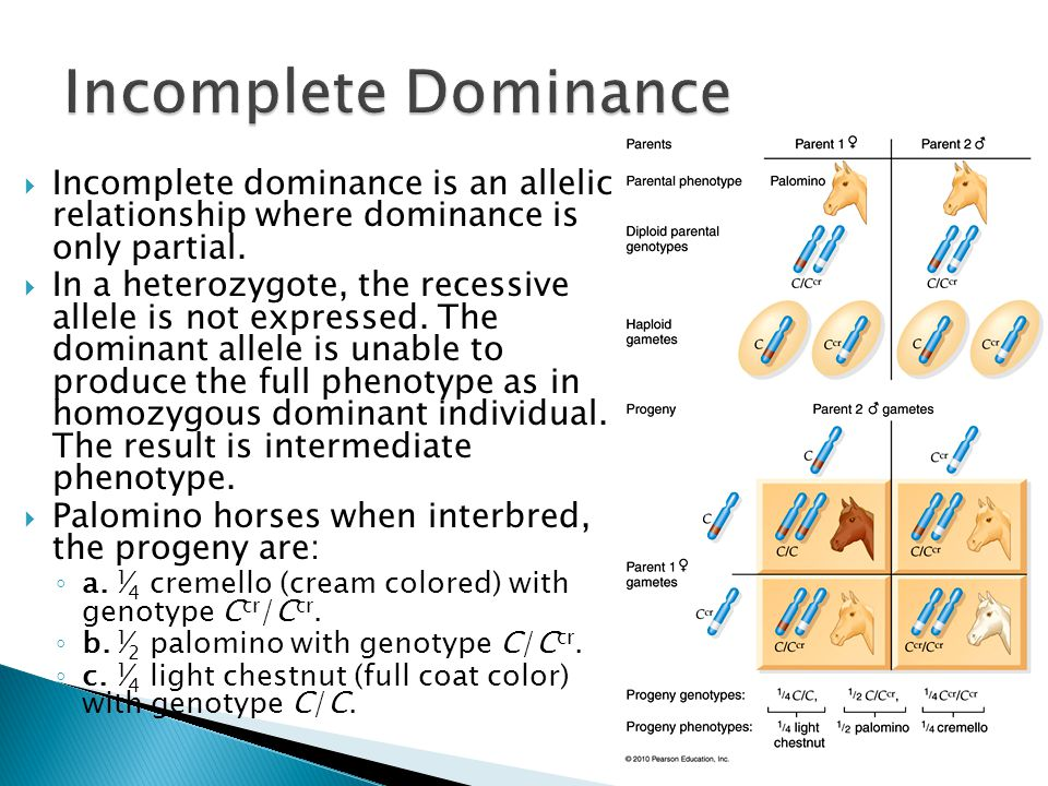 Incomplete Dominance Incomplete dominance is an allelic relationship where dominance is only partial.