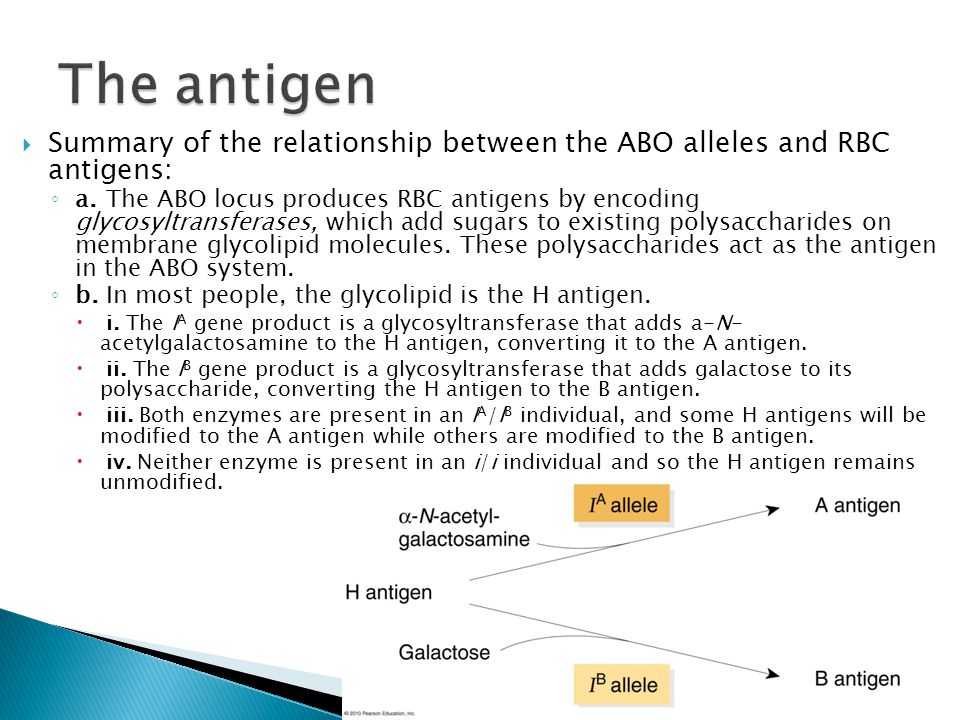 The antigen Summary of the relationship between the ABO alleles and RBC antigens: