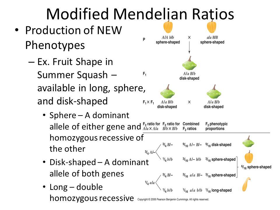 Modified Mendelian Ratios
