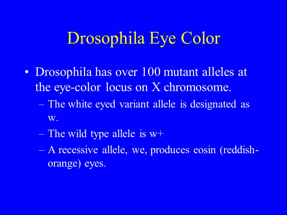 Drosophila Eye Color Drosophila has over 100 mutant alleles at the eye-color locus on X chromosome.