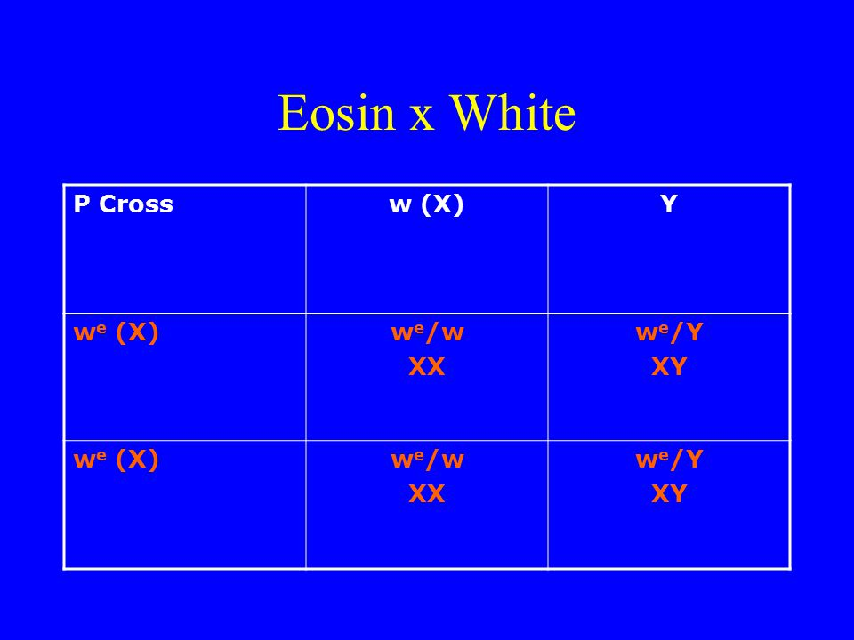 Eosin x White P Cross w (X) Y we (X) we/w XX we/Y XY