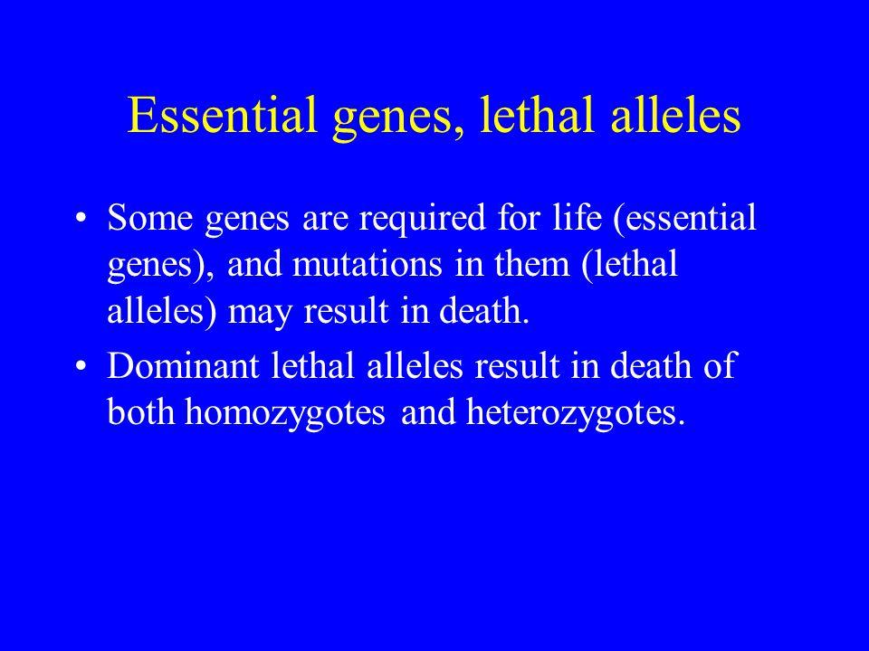 Essential genes, lethal alleles