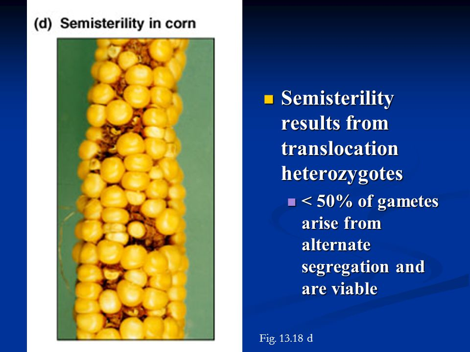 Semisterility results from translocation heterozygotes