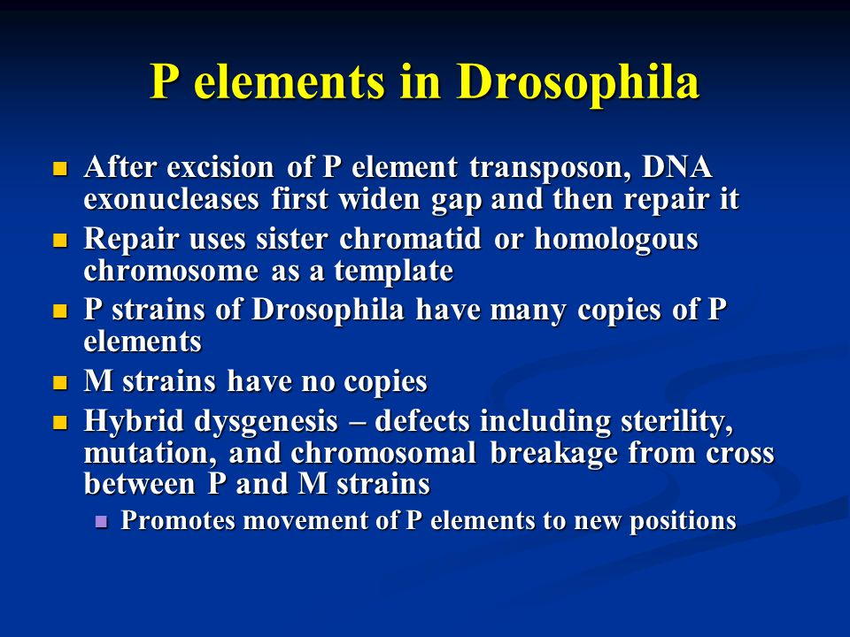 P elements in Drosophila