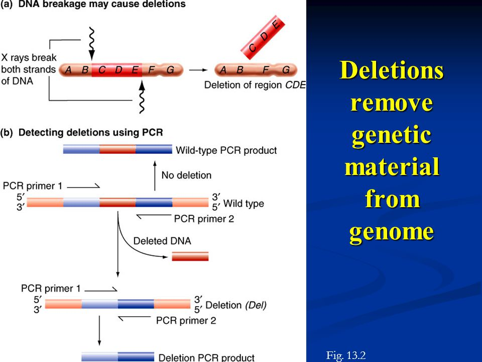 Deletions remove genetic material from genome