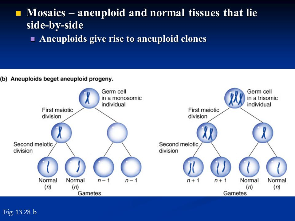 Mosaics – aneuploid and normal tissues that lie side-by-side